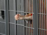 В тюрьмы приходят инновационные технологии