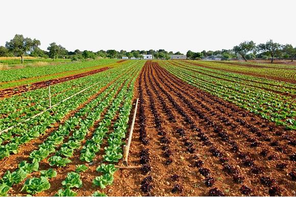 Yara и IBM предложат цифровые сервисы для фермеров
